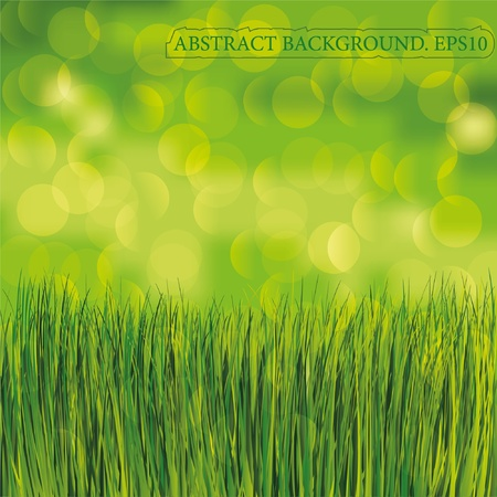plain background: Spring background. Green grass. Place for text