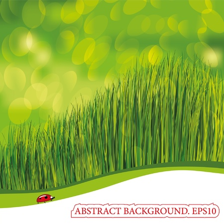 Spring background with ladybird. EPS10. Place for your text