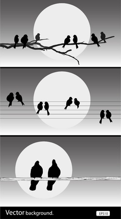 vector silhouette birds. Set of vector illustration Vector