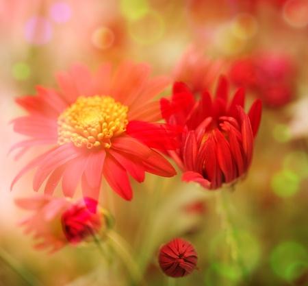 flowers bokeh: Flower field