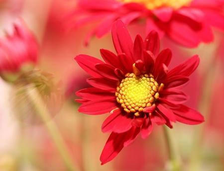 Flower field Stock Photo - 9843114