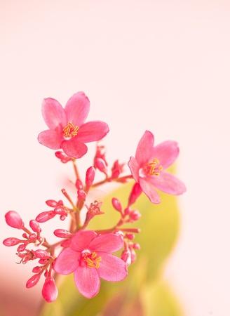 Pink flower Stock Photo - 9843086