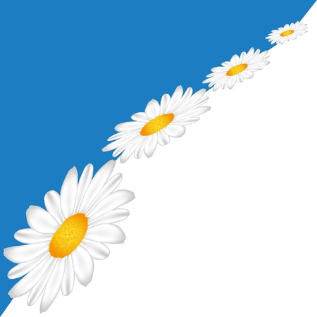 Line of Chamomile on the sky background.  Vector