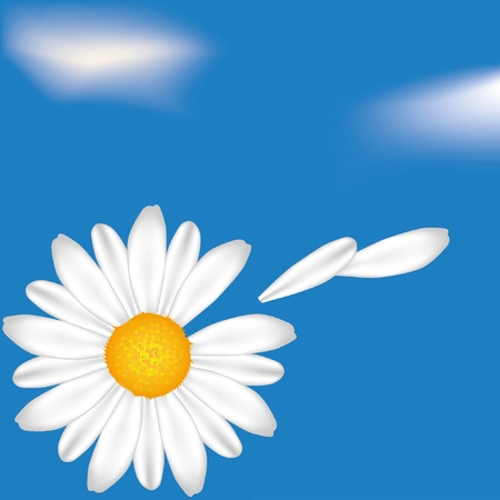 Camomile on the sky background. EPS10 Vector