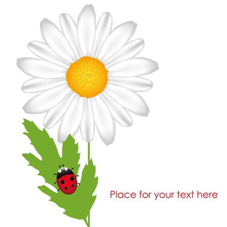 Chamomile with ladybird. White background. EPS10 Vector