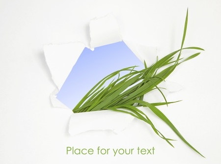 Green grass in abstract window. Spring background Stock Photo - 9965271