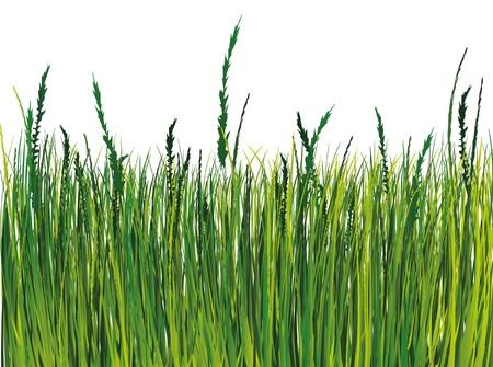 Grass illustration  Stock Vector - 9934945