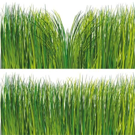 Grass set Stock Vector - 9934949
