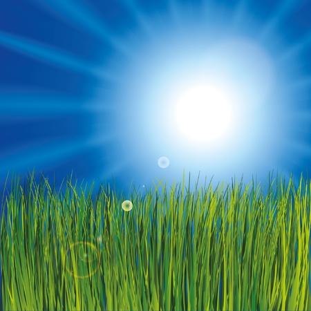 Grass and sunny sky Stock Vector - 9935046