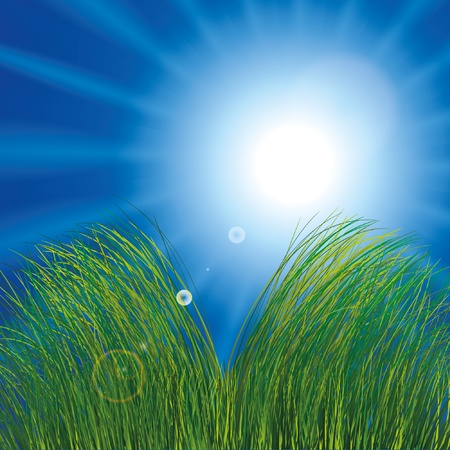 Grass and sunny sky Stock Vector - 9935055