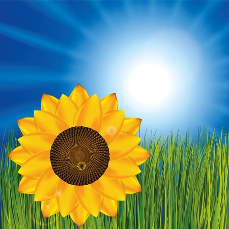 Grass and sunny sky as background with sunflower Stock Vector - 9935056