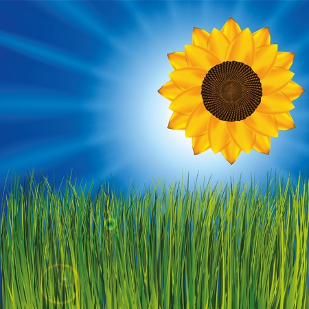 Grass and sunny sky as background with sunflower