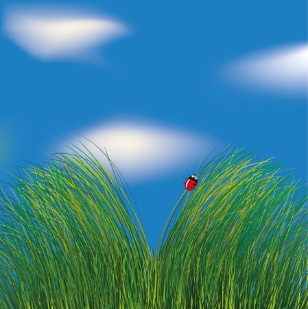 Ladybird in the grass on cloudy sky background