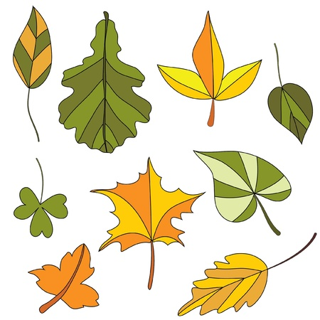 Set of autumn leaf. Isolated on the white background Vector