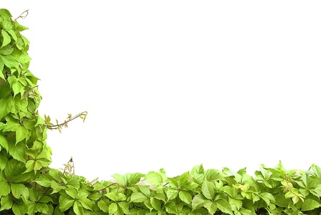 Border from green leaves. Space for your text Stock Photo - 10422031