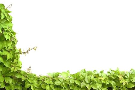 Grens van groene bladeren. Ruimte voor uw tekst Stockfoto