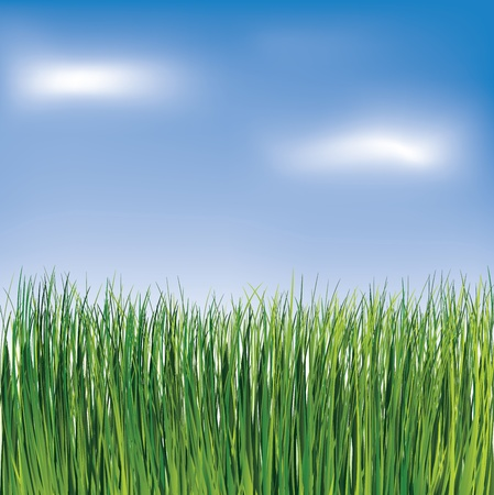 horizont: Green grass on the blue cloudy sky background. Vector illustration