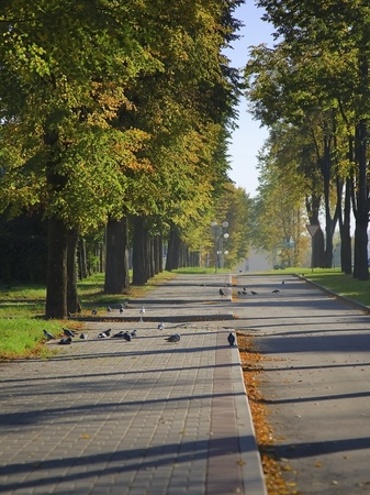 Walkway in the autumnal city photo