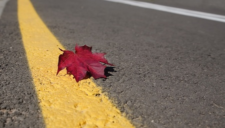 road autumnal: Autumnal maple leaf on the road for bicycle Stock Photo