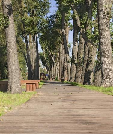 road autumnal: Wooden walkway between trees in the park Stock Photo