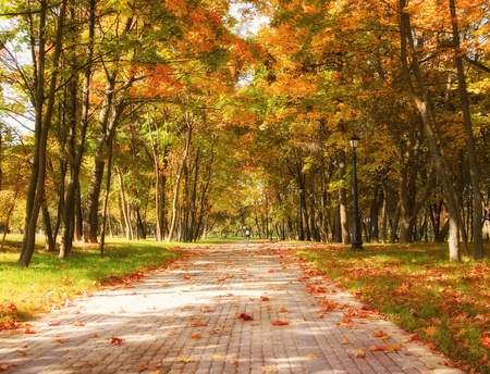 road autumnal: Autumn in the park