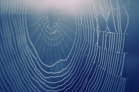 arachnoid: Spider web with water drops. Soft focuse. Blue background  Stock Photo