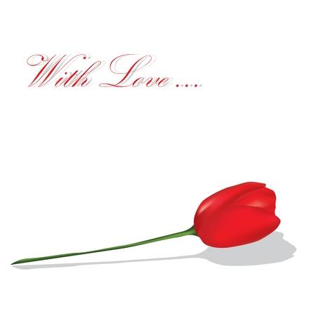 Red tulip on the white background. Vector illustartion Vector Illustration