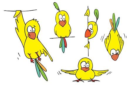 Set of Funny Bird cartoon. Vector illustration.  Vector