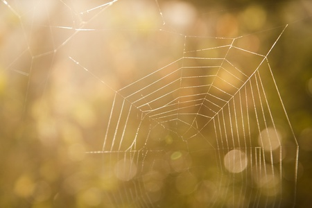 Spider web on the beautiful morning background. Soft focuse.  photo