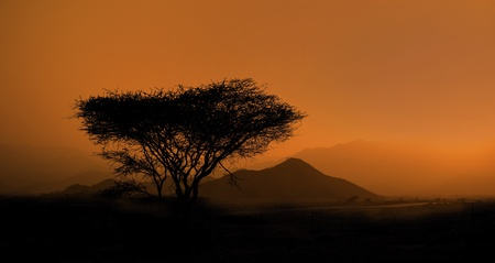 Savanna landscape. photo