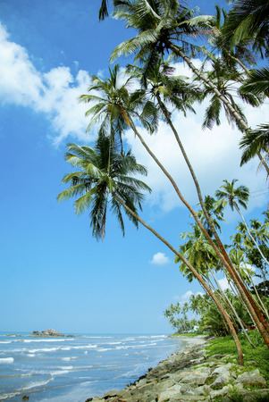Palm trees and ocean with blue sky background. Stock Photo