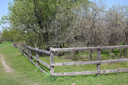 Wooden old fence encloses an apple orchard. Spring. Country nature.