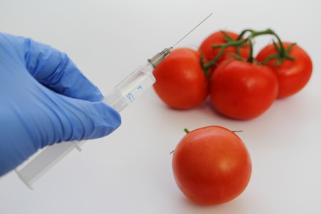 Syringe and tomatoes. The GMO Specialist injects liquid from a syringe into a red tomato. Genetically modified nutritional concept.
