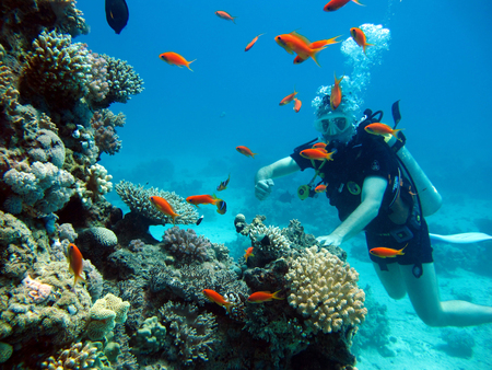 One diver in the Red Sea. Many beautiful fishes. Diving. Scuba diver. Banque d'images