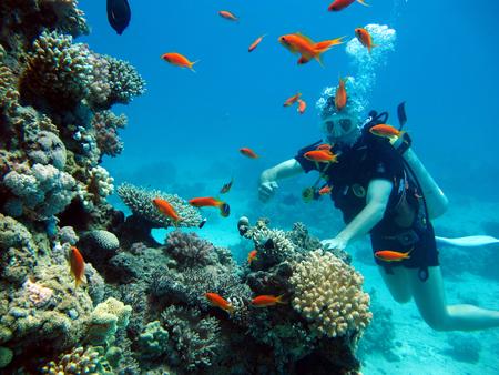 Un buceador en el Mar Rojo. Muchos hermosos peces. Buceo. Buzo. Foto de archivo