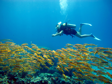 One diver in the Red Sea. Many beautiful fishes. Diving. Scuba diver.