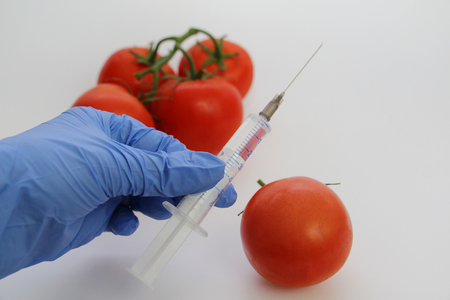 Syringe and tomatoes. The GMO Specialist injects liquid from a syringe into a red tomato. Genetically modified nutritional concept. Banco de Imagens