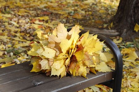 A bouquet of yellow, orange, red maple leaves lies on a bench in the forest. Autumn bouquet on a background of autumn forest. Maple golden autumn bouquet. Sunny weather.