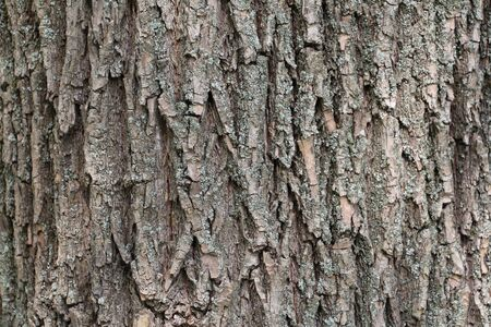 Carved texture of tree bark. The bark of an adult tree with cracks. Tree bark close-up. Beautiful wood texture. Banque d'images - 138372056