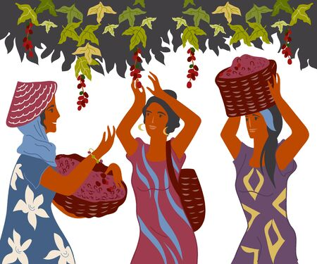 Coffee harvest gatherers in work flat cartoon vector illustration isolated. Illusztráció