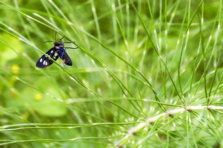 equisetum: Insect on plant