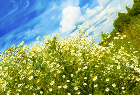 Sunny summer weather with clouds and daisies  photo