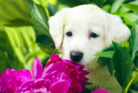 Little puppy white color in the colors of summer  Stock Photo