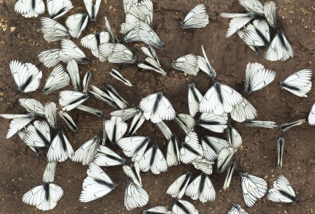 A large group of butterflies sitting on the ground in the summer  photo