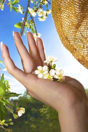 The flowering of fruit berry tree in the women s hands in the spring when the weather is Sunny  photo