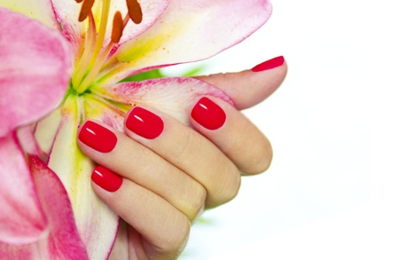 Coral nails on young female hands with pink Lily on a white background