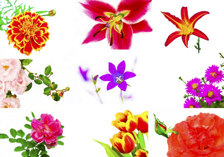 Floral collage of various decorative flowers - rose,chamomile,Lily,day-Lily is a,bell,Tulip on a white  photo