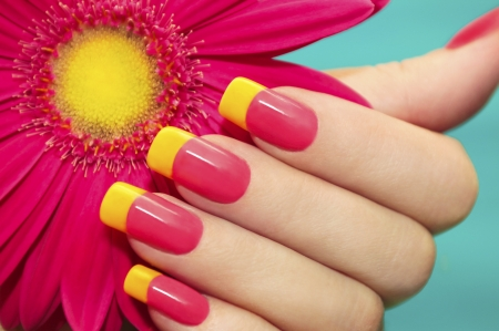 closeup of pink daisy with: Two-tone manicure with pink and yellow varnish with flower gerbera on a blue