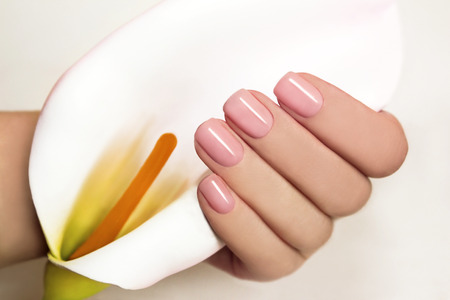 beige: Manicure with gel coating on the young female hand with flower Koala