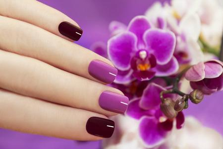 violeta: Uñas de moda de dos tonos con la mano femenina con orquídeas Foto de archivo